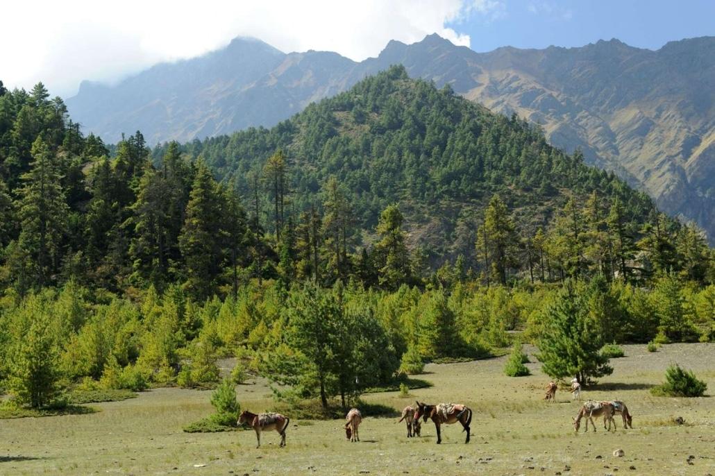 Le Tour Des Annapurnas8