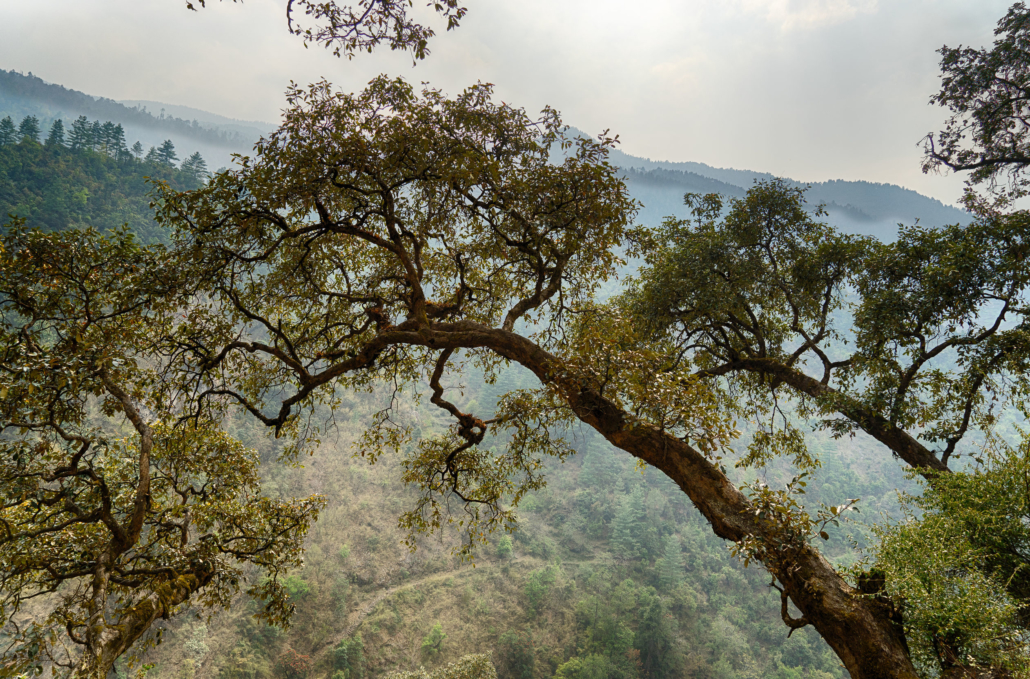 Hiking In Nepal Jungle Forest