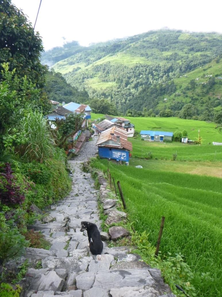 Balcon Des Annapurnas Forêt Chemin Et Chien